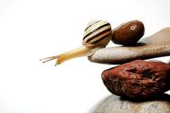Escargot sur des roches Image stock