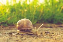 Escargot sur l'asphalte Image libre de droits