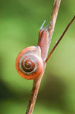 Escargot sur l'herbe Photographie stock libre de droits