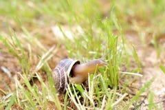 Escargot sur l'herbe Photographie stock