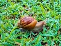 Escargot sur l'herbe verte Photographie stock