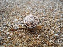 Escargot sur la côte de la mer Image libre de droits