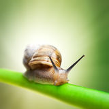Escargot sur la cheminée verte Photographie stock