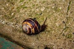 Escargot sur la longue route Photo libre de droits