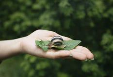 Escargot sur la paume d'une femme Photographie stock