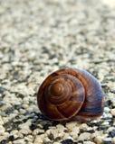 Escargot sur la pierre écrasée Image stock