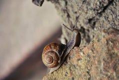 Escargot sur la pierre Photographie stock