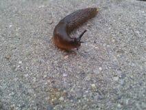 Escargot sur la roche Image libre de droits