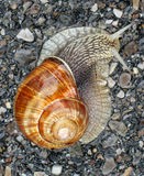Escargot sur la route Photographie stock libre de droits