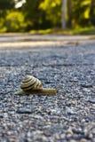 Escargot sur la route Photographie stock libre de droits
