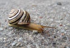 Escargot sur la route asphaltée Images stock