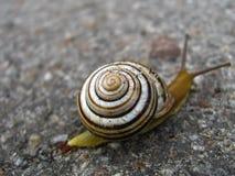 Escargot sur la route asphaltée Image libre de droits