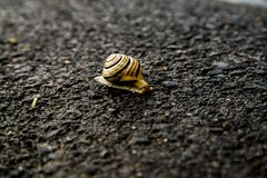 Escargot sur la rue de l'obscurit? ? allumer photo stock