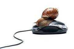 Escargot sur la souris Photographie stock libre de droits