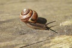 Escargot sur le banc en bois Photographie stock libre de droits