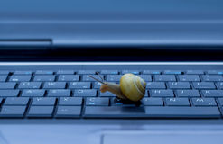 Escargot sur le clavier Image stock