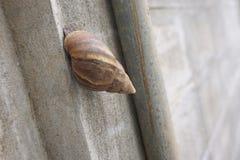 Escargot sur le mur Image libre de droits