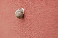 Escargot sur le mur Photographie stock libre de droits