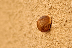 Escargot sur le mur Images libres de droits