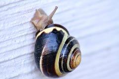 Escargot sur le mur Photo libre de droits