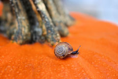 Escargot sur le potiron orange Photographie stock