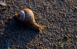 Escargot sur le sable image libre de droits