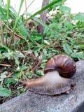 Escargot sur le trottoir Photo stock