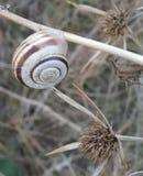 Escargot sur les échelles sèches au jardin botanique - Macea, le comté d'Arad, Roumanie photographie stock