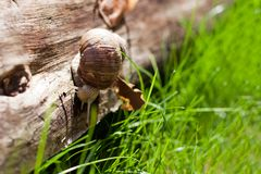 Escargot sur un arbre Photo libre de droits
