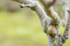 Escargot sur un arbre image libre de droits