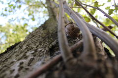 Escargot sur un arbre Image stock