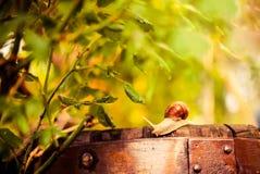 Escargot sur un baril extérieur dans le jardin Photos stock