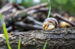 Escargot sur un identifiez-vous l'évier Photographie stock