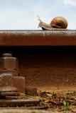 Escargot sur un longeron ferroviaire Images stock