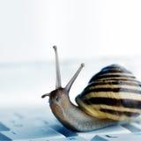 Escargot sur un ordinateur portatif Image stock