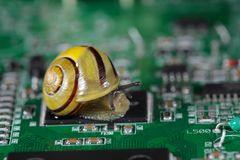 Escargot sur un panneau de conducteur image stock