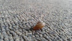 Escargot sur un tapis Images stock