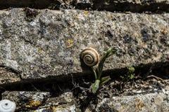 Escargot sur une brique Photographie stock libre de droits