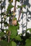 Escargot sur une feuille photo libre de droits