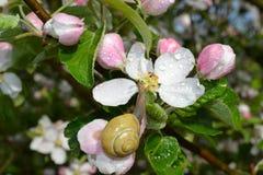 Escargot sur une fleur Photographie stock libre de droits