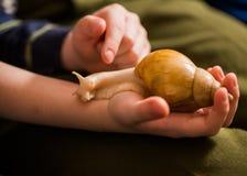 Escargot sur une paume Image libre de droits