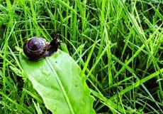 Escargot sur une traînée Photographie stock libre de droits