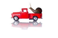 Escargot sur une voiture Photographie stock libre de droits