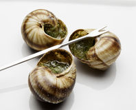 Escargot Royaltyfria Foton