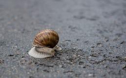 Escargot un jour pluvieux Photo libre de droits