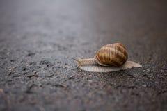 Escargot un jour pluvieux Photos libres de droits
