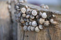 Escargots Image stock