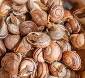 escargots Images libres de droits