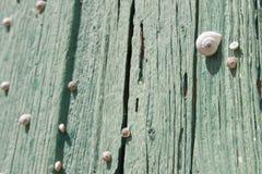 Escargots Photo stock