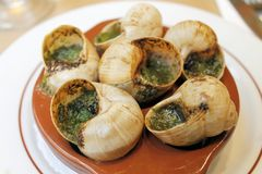 escargots 库存图片
